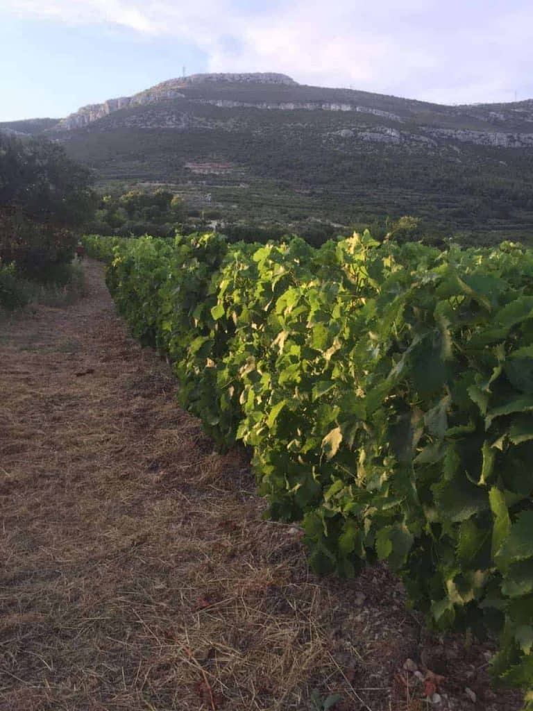 Wine tour in Kastela from Split including dinner and wine tasting
